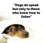 Dog-do-speak-but-only-to-those-who-know-how-to-listen-