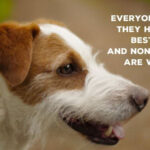 Qute-about-dogs-and-their-owners-1