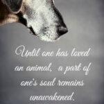 cfb2ce127610c910267e2d77327dc507-pet-quotes-animal-quotes