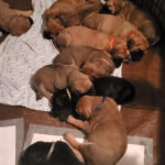 eliza-jane-pups