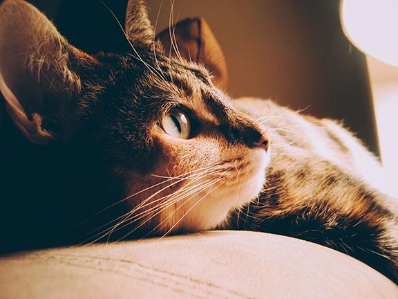 Cat & Kitten Care