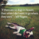 loss-of-a-pet-quote-if-there-are-no-dogs-in-heaven-then-ehrn-i-die-i-want-to-go-where-they-went-by-will-rogers-missing-you